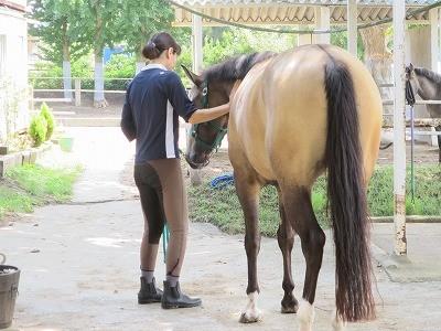 乗馬グランドワークの練習