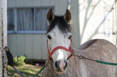 想いを汲んでくれる馬