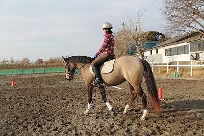 馬とパートナーになる本当の乗馬