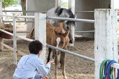馬とのコミュニケーションを体験