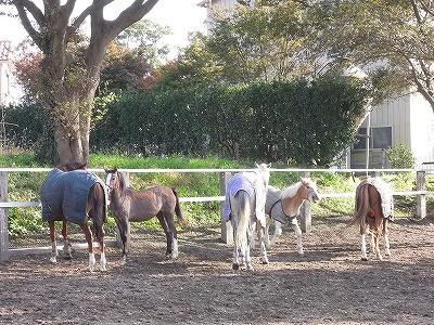 大人しい馬たちの放牧風景