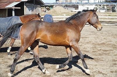 馬をのびのび育てる