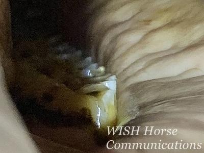 乗馬の整歯の必要性