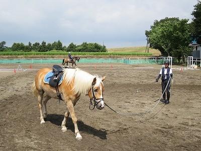 乗馬は知恵とハート