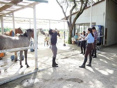 乗馬クラブに夏が来た!
