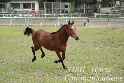 馬のかっこいいポーズ