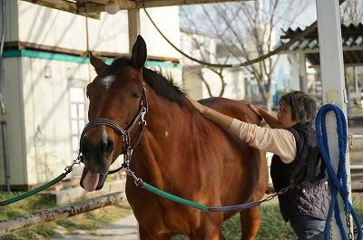 上手な馬の手入れ
