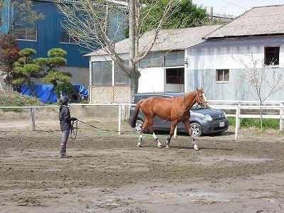 馬とダンス