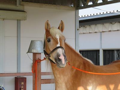 世界に一頭だけの馬