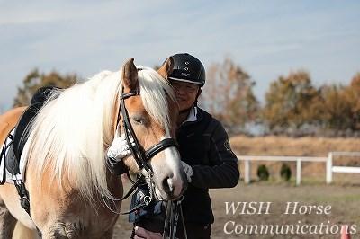 馬と一緒に楽しい時間