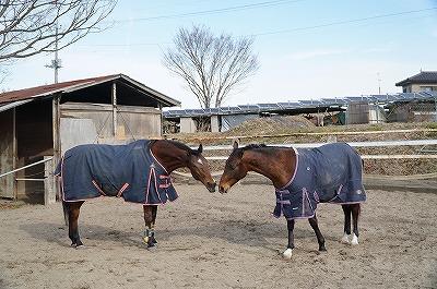馬はほんとはとっても表情豊かだよ