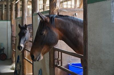 馬の表情は物語る