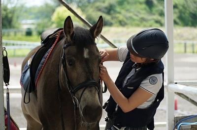 馬にかける想い