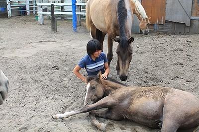 馬とのコミュニケーション