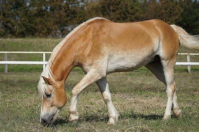 馬は全身で語る