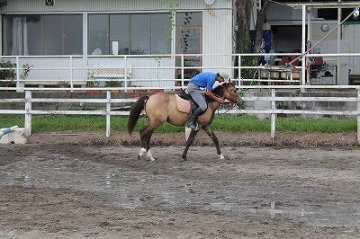馬を水に馴致する