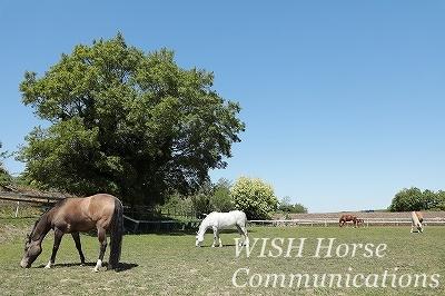 馬の話を聞く乗馬