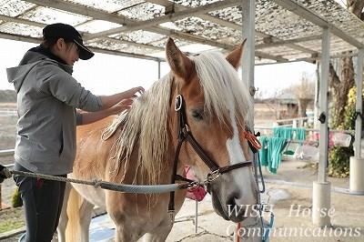 馬にちゃんと感謝できるかが大切です