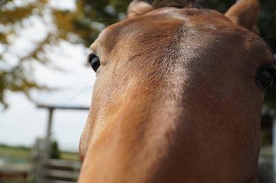 愛情のある馬