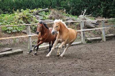 馬たちのかけっこ