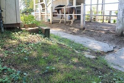 乗馬クラブの芝生の芽