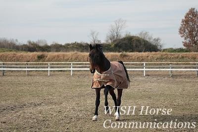 嬉しい乗馬