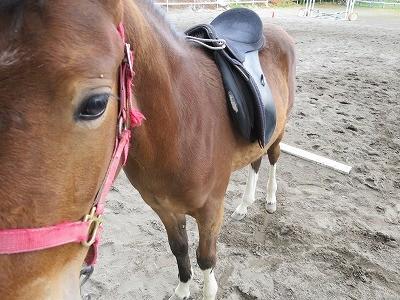 新馬調教 鞍を教える