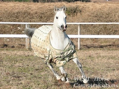 馬も健康が第一