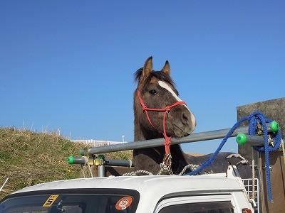 観光乗馬ならぬ観光している乗馬