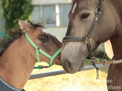 みんなに愛されていい馬に育っています
