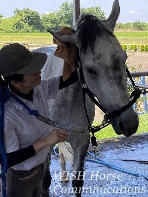 馬が甘えてくる乗馬