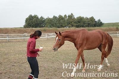 友愛の乗馬