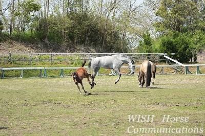 馬のジャンプ