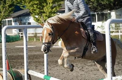 乗馬調教方法