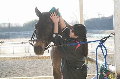 馬を幸せにする乗馬をしたい