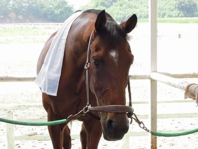 馬がなりきり矢沢永吉