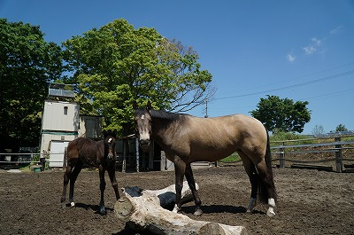 とんでもなく質の高い馬