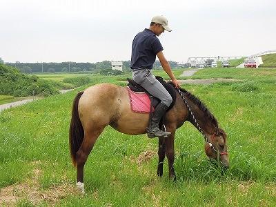 馬を育てる