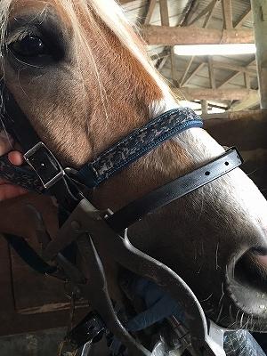 馬は定期的に歯のメンテナンスが必要です