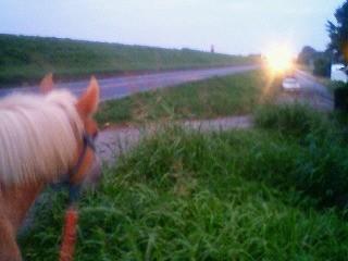 夕暮れ、馬とのんびり