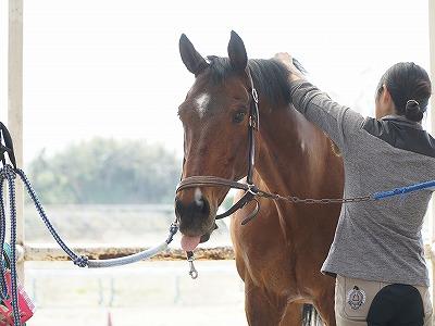 信頼を寄せる馬の表情