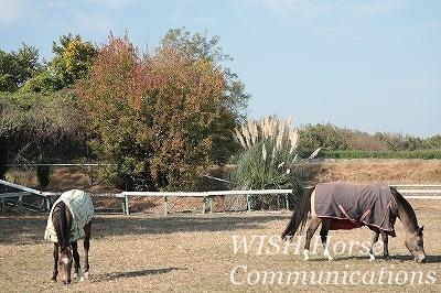 小春日和の馬達