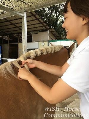 楽しい馬のたてがみ編み