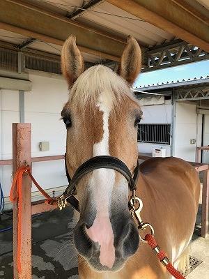 人間を信頼している馬は人間の目を見てくる