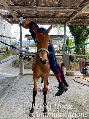 馬の鞍付け