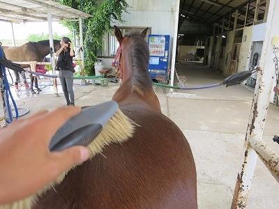 新馬調教 馬に考えさせる