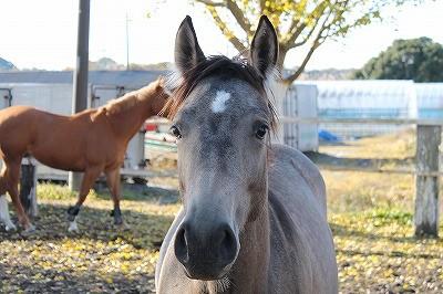 馬の信頼の証とはキラキラした瞳で顔を撫でさせること
