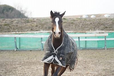 のびのび走る馬