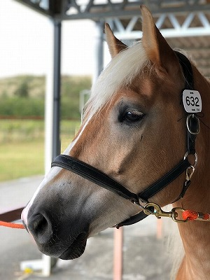 馬を賢く理性的にするのは人間次第