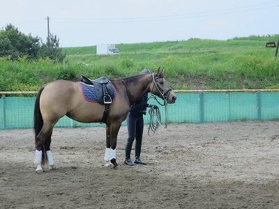 馬を柔らかく